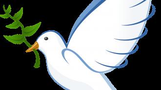 dove-41260_1280-1044x675